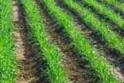 Biodunder® Based Products